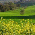 Marche -San Bartolo