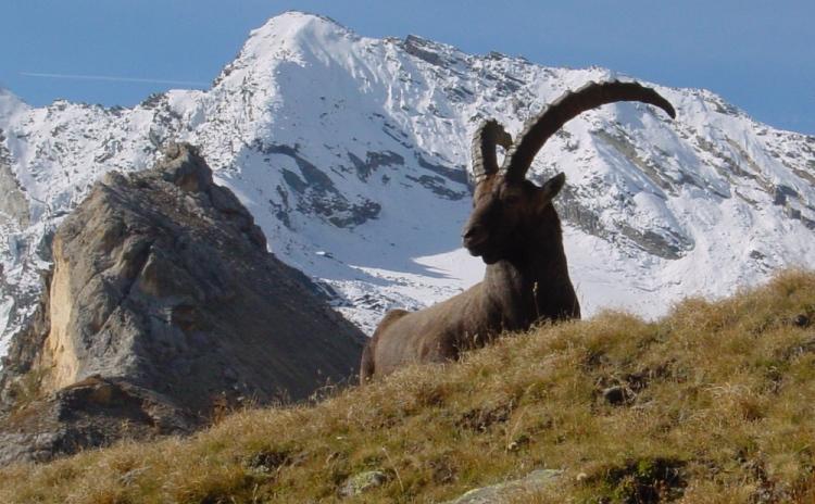 Piemonte - Gran Paradiso