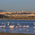 Sardinia - Flamingos in Cagliari