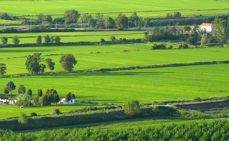 Piemonte - The Green Rice Fields of Vercelli