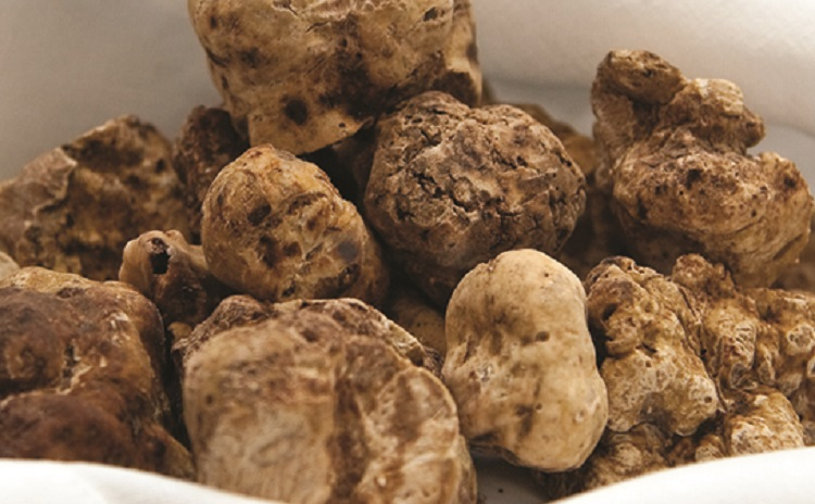National White Truffle Fair - Marche
