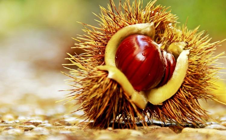 Chestnut Festival in Soriano - Lazio Italy