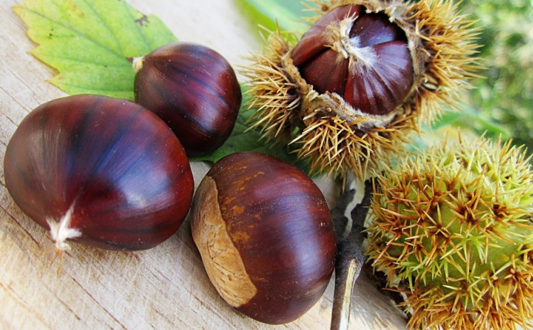 National Chestnut Fair - Cuneo Italy