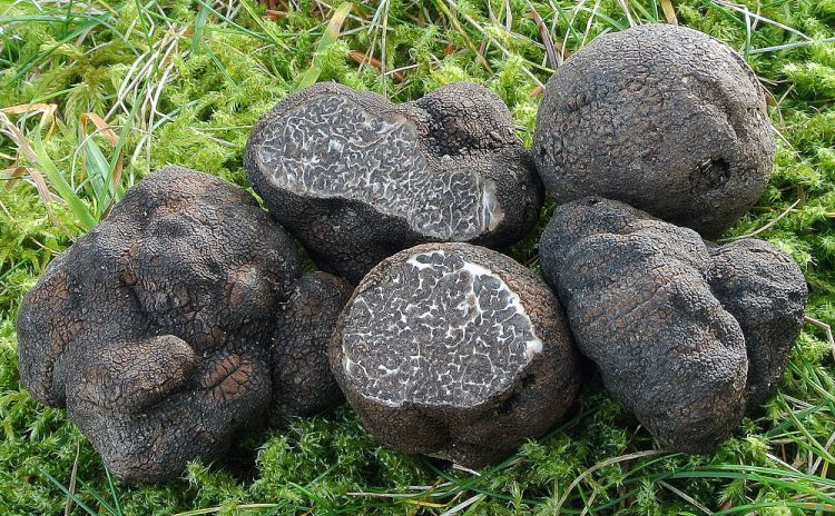 Chestnut and Black Truffle Festival