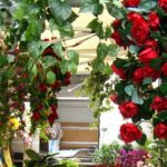 Saint Valentine feast - Terni