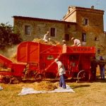 Cereal grain threshing festival - Città di Castello, Umbria Italy