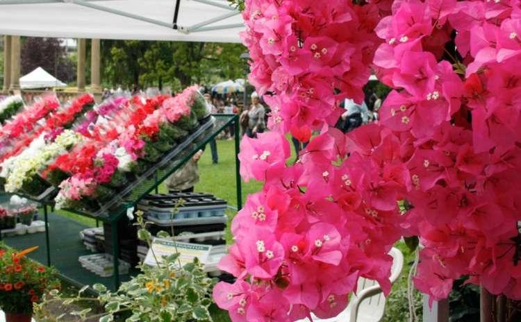 Le Piante Aromatiche : Eventi a firenze mostra mercato primaverile di piante e fiori