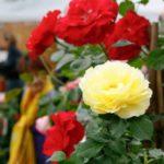 Mostra mercato primaverile di piante e fiori - Firenze