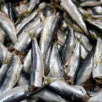 Festival del Pesce Azzurro