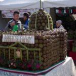 Romanesco Artichoke Festival Ladispoli - Lazio Italy