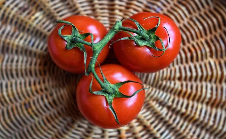tomatoes Calabria