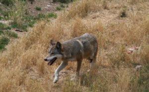 Sirente-Velino Regional Natural Park - Abruzzo - Italy