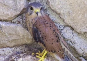 Birds of Prey Recovery Center - Friuli Venezia Giulia - Italy