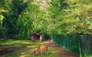 Prehistoric Park - Lombardy - Italy