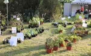 Ortocolto - Emilia Romagna - Italy
