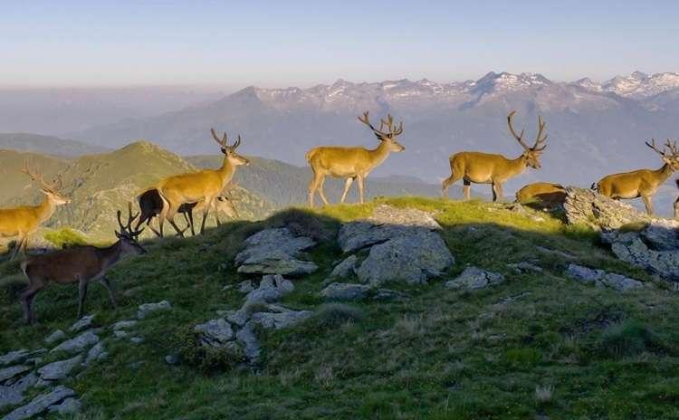 GPFF The Alps - Otmar Penker