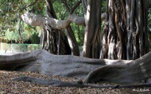 Sicilia - Orto Botanico Palermo